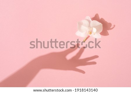 Shadow of female hand takes a white Orchid flower on pink background. Femininity concept. Womens, Mothers Day. Flat lay. Royalty-Free Stock Photo #1918143140