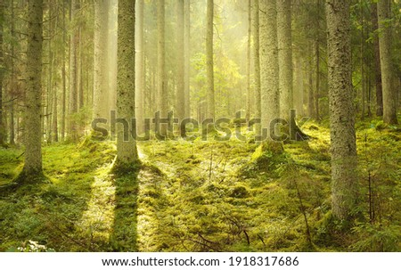 Majestic evergreen forest at sunrise. Mighty pine trees, moss, green plants. Morning fog, pure sunlight, sunbeams. Idyllic landscape. Nature, seasons, summer. Fairytale, fantasy concepts Royalty-Free Stock Photo #1918317686