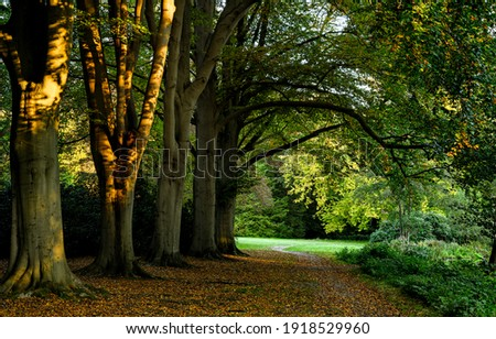 Forest park trail trees tunnel. Forest park trail. Trail in forest park. Forest trail Royalty-Free Stock Photo #1918529960