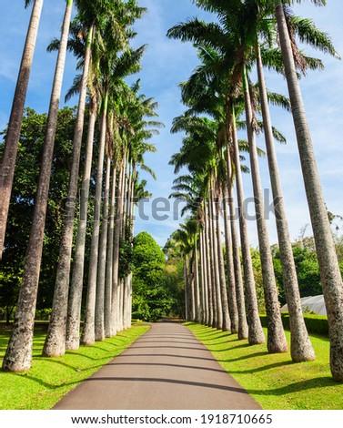 Peradeniya Royal Botanic Gardens located near Kandy city, Sri Lanka. Peradeniya Royal Botanic Gardens are the largest of the botanical gardens of Sri Lanka. Royalty-Free Stock Photo #1918710665