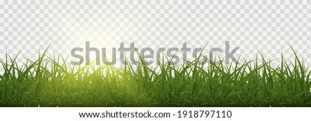 Vector grass, lawn. Grasses png, lawn png. Young green grass with sun glare. Royalty-Free Stock Photo #1918797110
