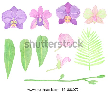 Orchid phalaenopsis watercolor set illustration. Beautifull exotic flower in a full bloom with green buds on a stem.