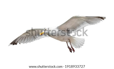 Flying seagull isolated on white background Royalty-Free Stock Photo #1918933727