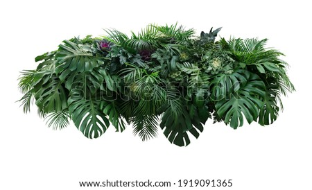 Tropical leaves foliage plant jungle bush floral arrangement nature backdrop with Monstera and tropic plants palm leaves isolated on white background, clipping path included. Royalty-Free Stock Photo #1919091365