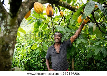 African farmer looks satisfied at his cocoa beans from the plants of his plantation Royalty-Free Stock Photo #1919149286