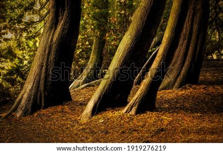 Tree trunks in autumn forest. Tree trunks. Tree trunks view. Tree trunks in forest fall Royalty-Free Stock Photo #1919276219