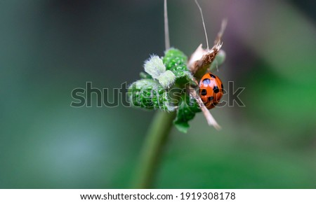 macro nature picture of ladybugs on fern leaf. Green background with place for text