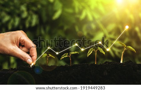 Hand planting seedling growing step in garden with sunny background. Concept of business growth, profit, development and success. Royalty-Free Stock Photo #1919449283