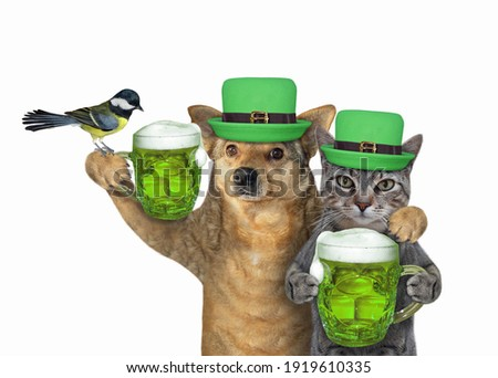A gray cat with a dog drink green beer. St. Patrick's Day. White background. Isolated.