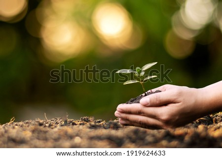 Human hands planting seedlings or trees in the soil Earth Day and global warming campaign. Royalty-Free Stock Photo #1919624633
