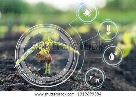 Smart farming with IoT,Growing corn seedling with infographics. Smart farming and precision agriculture 4.0 Royalty-Free Stock Photo #1919699384
