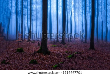 Forest mist in autumn fall. Misty forest trees. Forest mist view. Forest trees in autumn mist Royalty-Free Stock Photo #1919997701