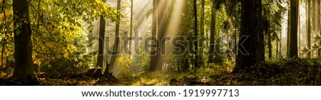 Forest sunbeams in morning panorama Royalty-Free Stock Photo #1919997713