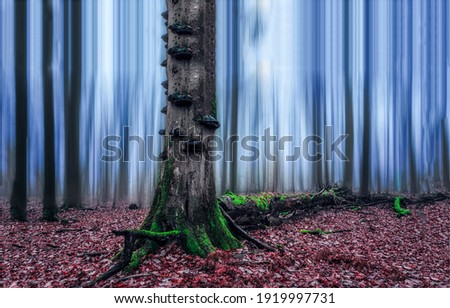 Autumn forest mist. Tree trunk in autumn forest mist. Forest mist tree trunk. Forest mist in autumn fall Royalty-Free Stock Photo #1919997731