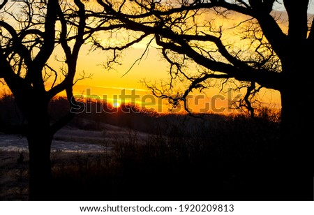 Orange sunset tree branches silhouette. Sunset tree branches. Sunset tree branch. Tree branches sunset view Royalty-Free Stock Photo #1920209813