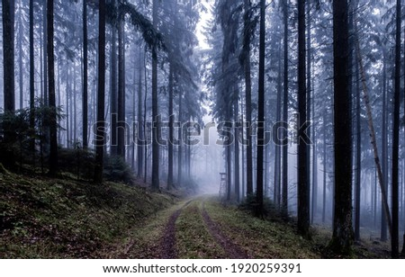 Forest mist trail. Trail to forest mist. Misty forest trail. Forest mist view Royalty-Free Stock Photo #1920259391