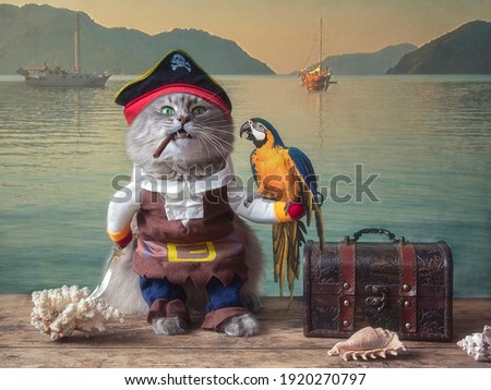 Funny cat dressed as a pirate with a parrot on the pier