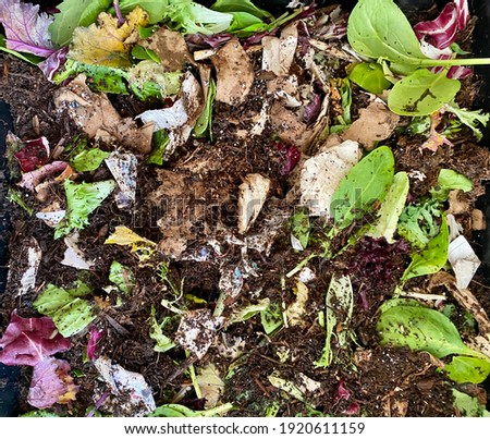Close up of home kitchen worm bin with mixture of green vegetables and fiber paper with red wiggler worms (Eisenia fetida) in a vermicomposting compost container.