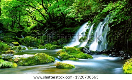 Green-Waterfall-River-rocks-covered-with-green-moss-Forest-Waterfall. deep forest at center of the forest with a waterfall. quiet and pleasant environment for tourism. very deep forest area Royalty-Free Stock Photo #1920738563