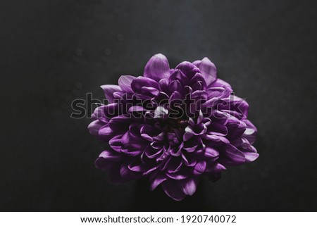 Purple Flower Closeup - Dark Photography