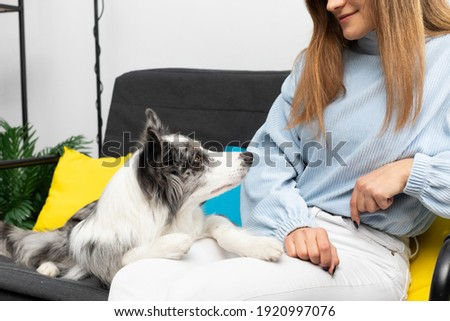 The teenager is sitting on the sofa and the dog is lying and resting his paws on her legs. Intelligent Border Collie Sheepdog. Modern interior design of the apartment.