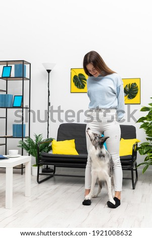 A teenager is standing in a large room with dog patches on her feet and a dog looking at her guardian. Intelligent Border Collie Sheepdog. Modern interior design of the apartment.