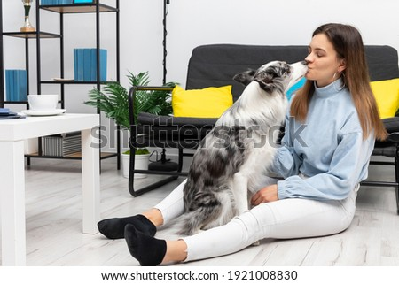 The dog sitter is sitting on the floor with her dog in front of her and gives her a kiss. Intelligent Border Collie Sheepdog. Modern interior design of the apartment.