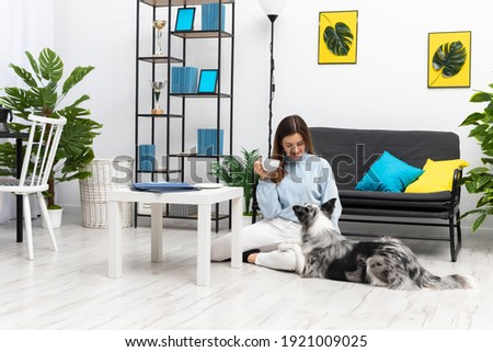 The sitter is sitting on the floor drinking coffee and the dog is lying next to her, looking at her. Intelligent Border Collie Sheepdog. Modern interior design of the apartment.