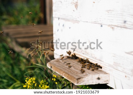 Close-up swarm of honey bees carrying pollen to beehive in bright summer sunny day at apiary. Swarm of bees flies into hive collect pollen to honey, closeup. Concept of bee agriculture. Royalty-Free Stock Photo #1921033679