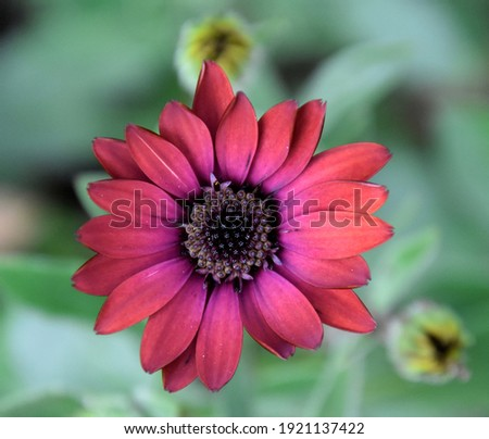 A Beautiful Pink Flower with Black Pollen Closeup Photography