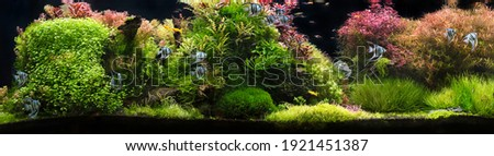 Aquarium with tropical fish jungle landscape with nature forest design tank with variety plants fish drift wood rock stone, underwater landscape with a variety of aquatic plants inside.   Royalty-Free Stock Photo #1921451387