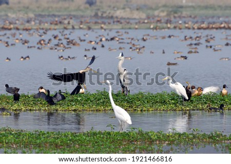 Nine Different Species Of Birds In One Frame Royalty-Free Stock Photo #1921466816