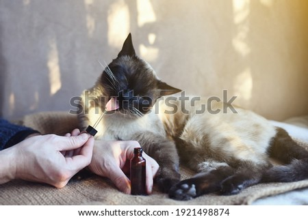 Man giving CBD oil to his feline pet at home as treatment Royalty-Free Stock Photo #1921498874