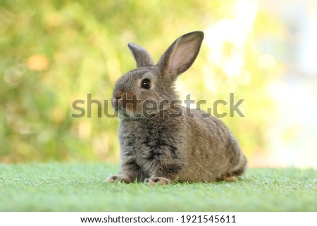 Cute little rabbit on green grass with natural bokeh as background during spring. Young adorable bunny playing in garden.