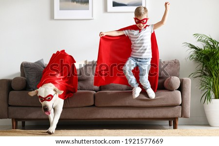 Full body energetic little boy and cute purebred Labrador retriever dog wearing similar red superhero capes and glasses jumping together from sofa while playing at home Royalty-Free Stock Photo #1921577669