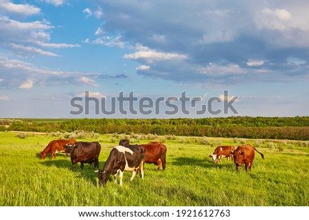 Cows grazing on a green summer meadow Royalty-Free Stock Photo #1921612763