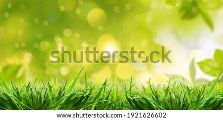 Green grassland landscape in summertime,wallpaper. Royalty-Free Stock Photo #1921626602