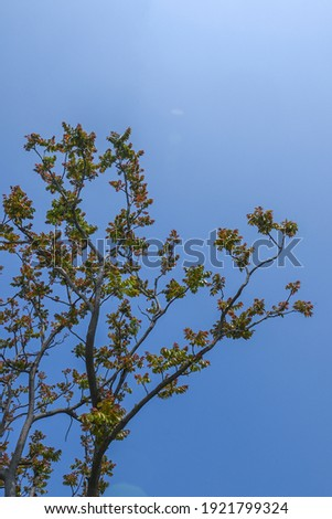 A toon sprouted in spring Royalty-Free Stock Photo #1921799324