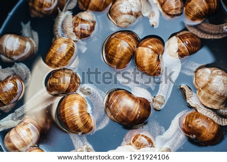 Grape snails in pan with water. Escargot traditional french snail dish. View from above. Grape Snail Delicacy. Preparing snails for cooking. Royalty-Free Stock Photo #1921924106