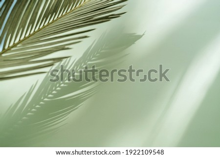 Palm leaf on a green surface with shadow. Stylish background for presentation. Royalty-Free Stock Photo #1922109548