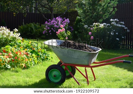 Wheelbarrow full of compost on green lawn with well-groomed phlox flowers in private farmhouse. Seasonal work and fertilization in garden. Outdoors. Royalty-Free Stock Photo #1922109572