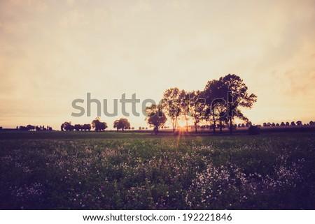 vintage photo of sunset on field. rural landscape #192221846