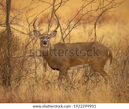 Whitetail Deer Hunting in Fall Royalty-Free Stock Photo #1922299901