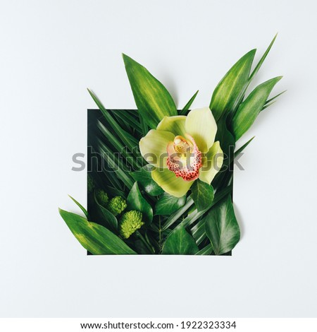 Creative minimal arrangement with green palm leaves and orchid flower on bright white background. Creative nature or spring bloom concept. Flat lay, top view. Royalty-Free Stock Photo #1922323334