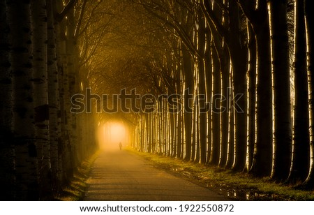 Forest alley tunnel mist view. Alley ttrees tunnel mist road. Trees tunnel road mist. Misty tree alley tunnel view Royalty-Free Stock Photo #1922550872