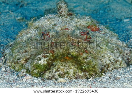 close up picture with short depth of field of stone fish