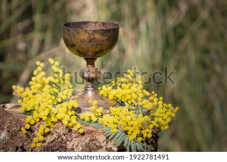 Closeup detailed concept Easter picture with a steel chalice cup on a wooden trunk altar filled and surrounded by yellow mimosa flowers in springtime with natural beautiful colorful background