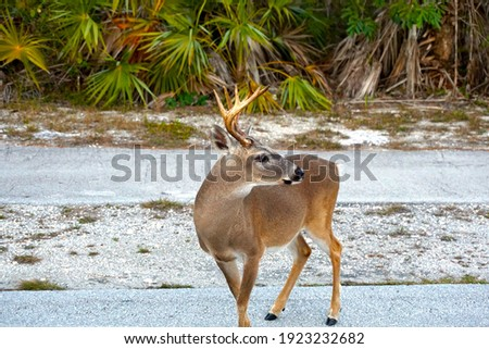 A picture of a deer.