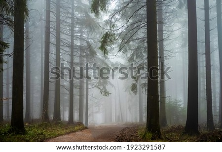 Road in forest mist view. Forest mist. Fog in forest mist. Misty forest trail view Royalty-Free Stock Photo #1923291587