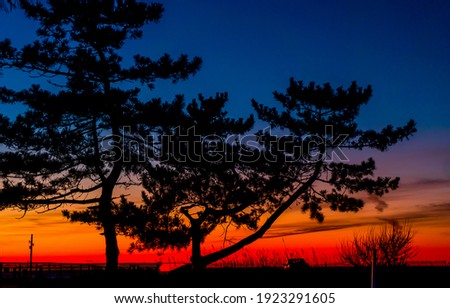 Red sunrise tree silhouette view. Red sunset tree. Tree silhouette sunset. Sunset tree silhouette Royalty-Free Stock Photo #1923291605
